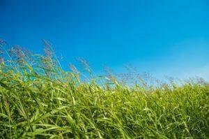 風に吹かれている草原