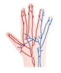 手の甲の血管